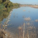 View of the restored San Joaquin River